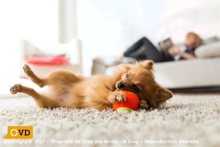 Refuser un animal dans un logement locatif